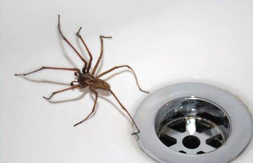 common pest Control