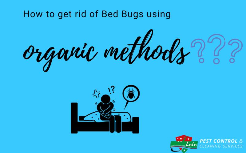 Bed bug control dubai